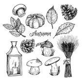 Hand drawn vector illustration - Autumn. Design elements for inv — Stock Vector