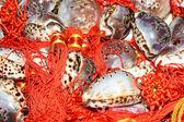 巻き貝 — ストック写真