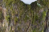 Digitally altered seamless texture mossy bark on rain forest tre — Stock Photo