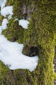 Digitally altered seamless texture mossy bark on rain forest tre — Stock Photo