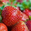 Red ripe fresh strawberries — Stock Photo #58748299