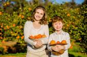 Smiling happy mother and son hold oranges in their hats on citrus farm — 图库照片