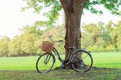 Bicycle on green grass under tree — Stock Photo