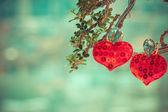 Heart love symbol on tree — Stock Photo