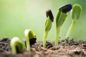 Root seed on soil with sunbeam begining concept — Stock Photo