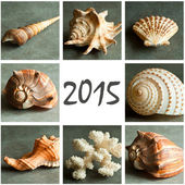 Shell and pebbes 2015 collage — Stock Photo