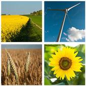 Sustainable development collage — Foto Stock