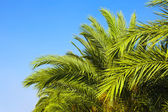 Palm trees and the blue sky. Tropical background. — 图库照片