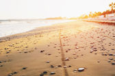 Bicycle tyre tracks on a sandy beach at sunset — Stock Photo