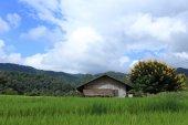 Terrace green rice fields — Stock Photo