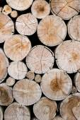 Wood logs for industry — Stock Photo