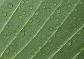 Leaf with water dew drops — ストック写真