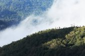 Jungle forest and mountain with mist — 图库照片