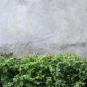 Cementowe ściany tekstura tło zielony liść — Zdjęcie stockowe