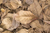 Autumn dry leaves fall on the ground — Стоковое фото