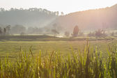 Green paddy rice fields of agriculture plantation — Foto de Stock