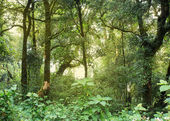 Green jungle with tree rainforest — Stockfoto