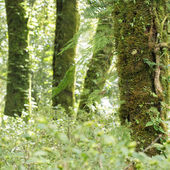 Green tree with moss and fern in rain forest — Stock Photo