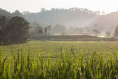 Green paddy rice fields of agriculture plantation — Stock fotografie
