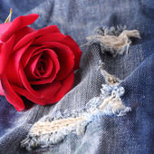 Red rose flower on blue jeans denim texture — Stock Photo