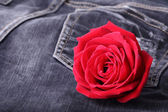 Red rose flower on black jeans denim texture — Stock Photo