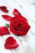 Fleur rose rouge sur fond bois blanc — Photo
