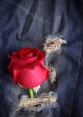 Rote rose Blume auf Blue Jeans Denim Textur — Stockfoto