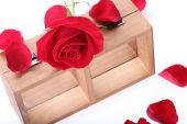 Wood shelf decorated with red rose flowers isolated on white bac — Stok fotoğraf