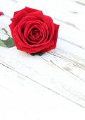 Red rose flower on white wood background — Stock Photo