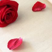Red rose flower on blank paper page for creative — Stock Photo