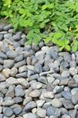 Pile pebbles stone and green leaf in garden — Stock Photo