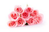 Pink rose flower on white background — Stock Photo