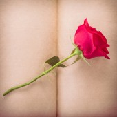 Red rose flower on blank paper page for design — Stock Photo