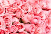Pink rose flower bouquet background — Stock Photo