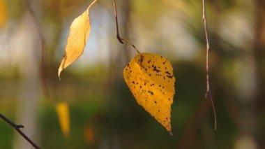 Autumn leaves & river bokeh move — Stock Video
