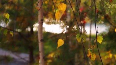 Autumn leaves & river bokeh — Stock Video
