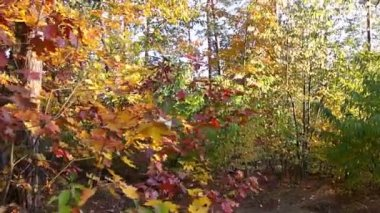 All the colors of autumn - steadicam — Stock Video