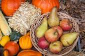 Autumn fruits — Stock Photo