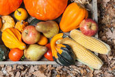 Herfst vruchten — Stockfoto