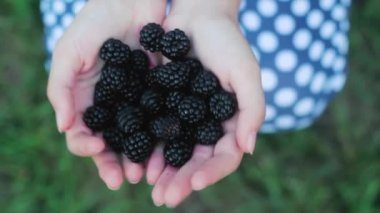 The Girl is Holding blackberry . Delicious berries . — Stock Video