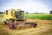 Combine harvests wheat on a field — Stock Photo