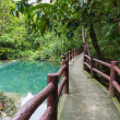 Pathway located in deep forest over Natural Blue Lagoon — Stock Photo #61624501