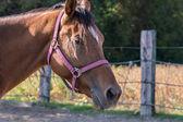 马的肖像 — 图库照片