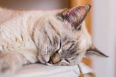 A nice sleeping cat blissful — Stock Photo