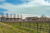 Agricultural Landscape with vineyard — Stock Photo