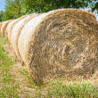 Hay bales in row. — Stock Photo #75438831