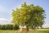 Zemědělská scéna — Stock fotografie