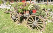 鉢花の古い木製カート — ストック写真