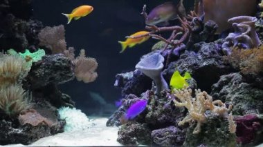 Coral colony on the reef with fishes — Stock Video