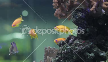 Underwater coral reef and fishes — Stock Video